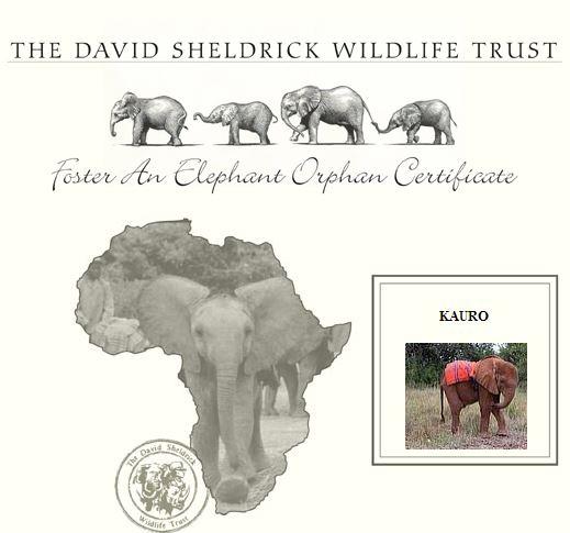 Foster an elephant