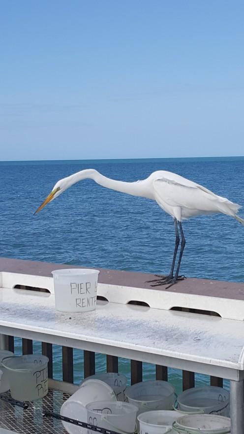pier-bird